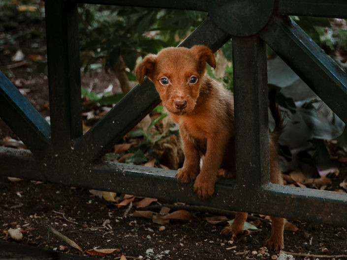 foto_welpe_1440_1-705x529 Hundefoto