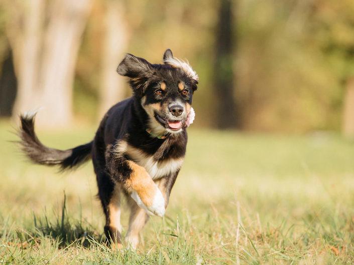 sir-click-a-lot-hundefotografie-Fee-4-705x529 Hundefoto