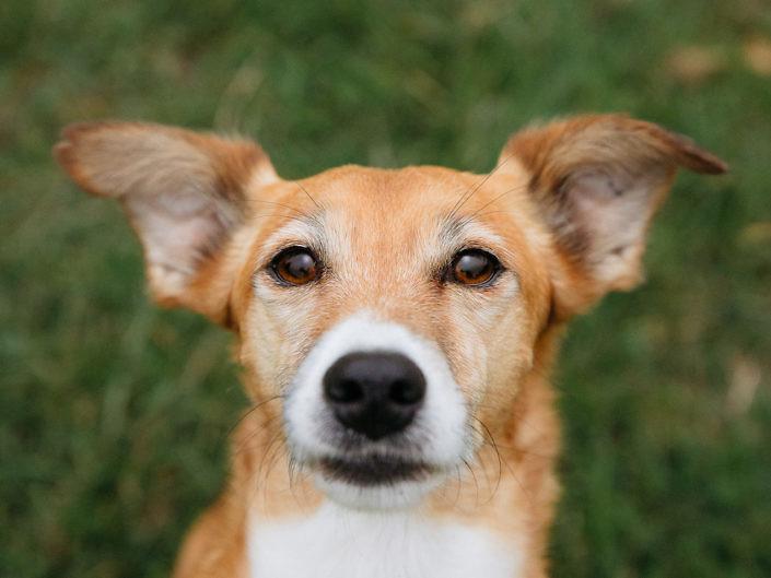 sir-click-a-lot-hundefotografie-betty-3-705x529 Hundefoto