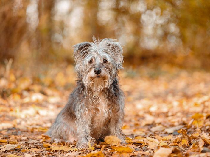 sir-click-a-lot_floechen_1440px_3-705x529 Hundefoto