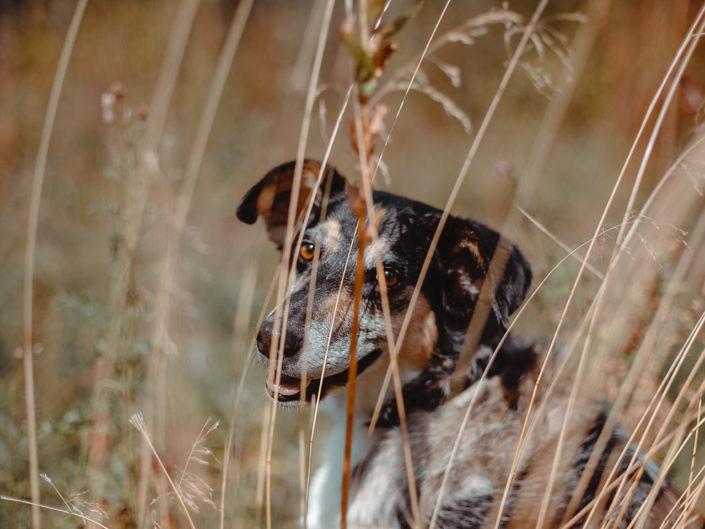 hundefotografie-koeln-1440-1-2-705x529 Hundefoto