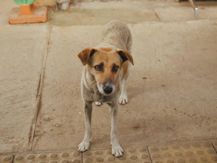hundefotografie-koeln-1440-20180729-1-705x529 Hundefoto