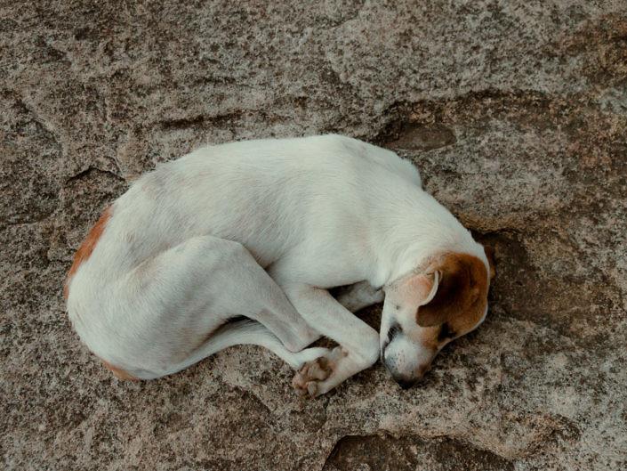 hundefotografie-koeln-1440-20180814-12-705x529 Hundefoto