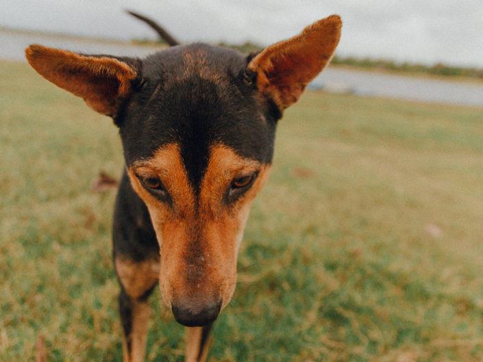 hundefotografie-koeln-1440-20180817-13-705x529 Hundefoto
