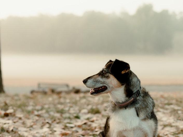 hundefotografie-koeln-1440-20180823-14-705x529 Hundefoto