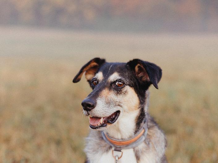 hundefotografie-koeln-1440-20180823-15-705x529 Hundefoto