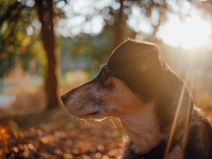 hundefotografie-koeln-1440-20180829-19-705x529 Hundefoto