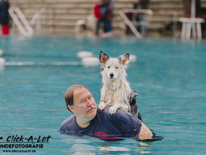 hundeschwimmen-koeln-2018-wm-800-1-705x529 Hundefoto