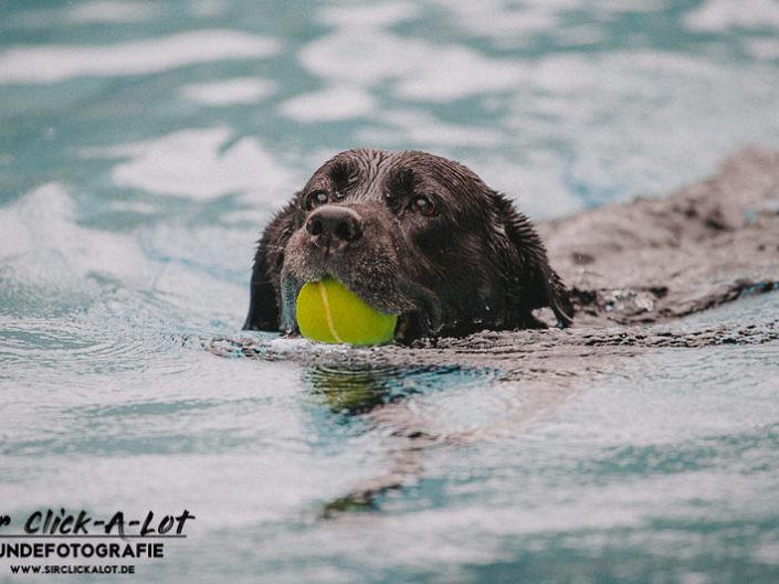 hundeschwimmen-koeln-2018-wm-800-5-705x529 Hundefoto