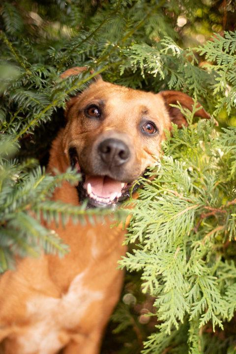 hund-versteck-fotografie-1440-1-480x720 Hundefoto