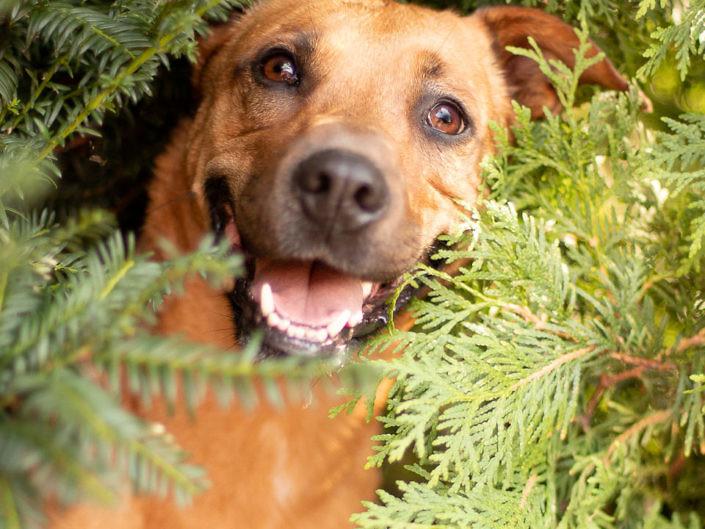 hund-versteck-fotografie-1440-1-705x529 Hundefoto